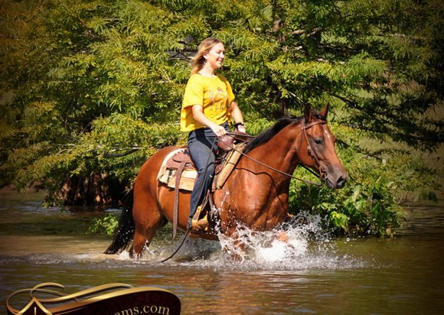 021-Cash-Bay-AQHA-Gelding-For-Sale