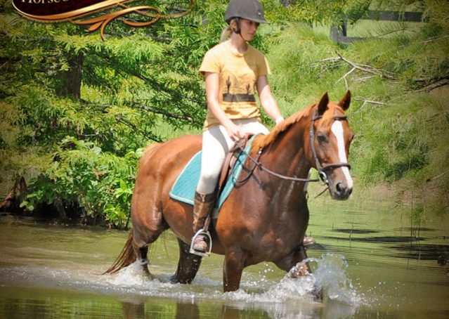 021-Jackson-Chestnut-thoroughbred-gelding-for-sale