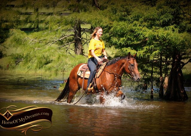 022-Cash-Bay-AQHA-Gelding-For-Sale