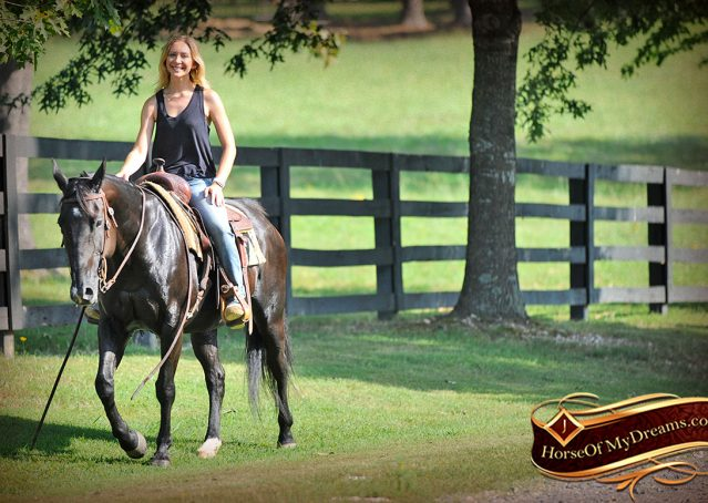 022-Espresso-Black-Quarter-Horse-Gelding-For-Sale