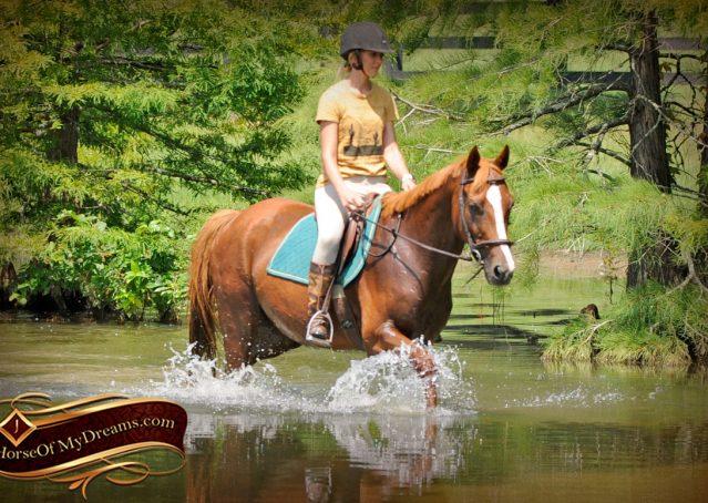 022-Jackson-Chestnut-thoroughbred-gelding-for-sale