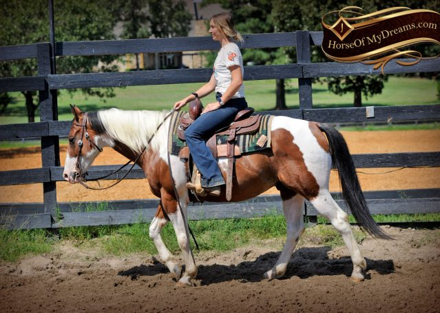 023-Cutter-Bay-White-APHA-Gelding-For-Sale