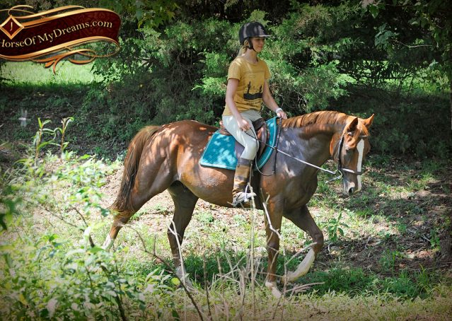 023-Jackson-Chestnut-thoroughbred-gelding-for-sale