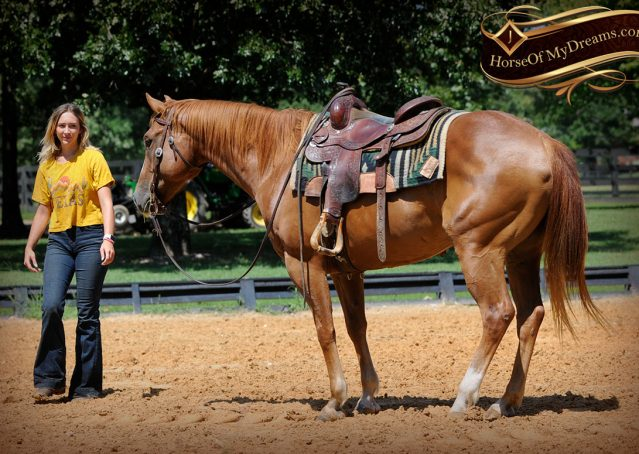 023-Ray-AQHA-Sorrel-Doc-O'lena-gelding-for-sale