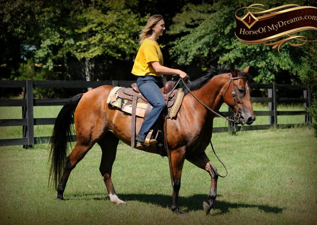 024-Cash-Bay-AQHA-Gelding-For-Sale