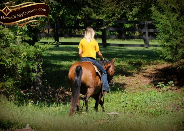 025-Cash-Bay-AQHA-Gelding-For-Sale