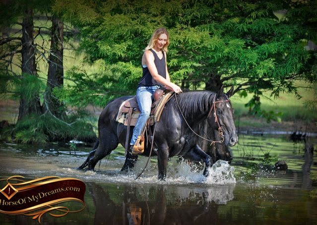 025-Espresso-Black-Quarter-Horse-Gelding-For-Sale