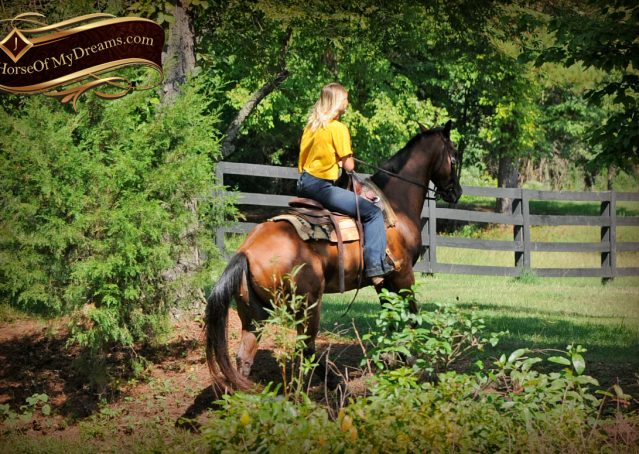 026-Cash-Bay-AQHA-Gelding-For-Sale