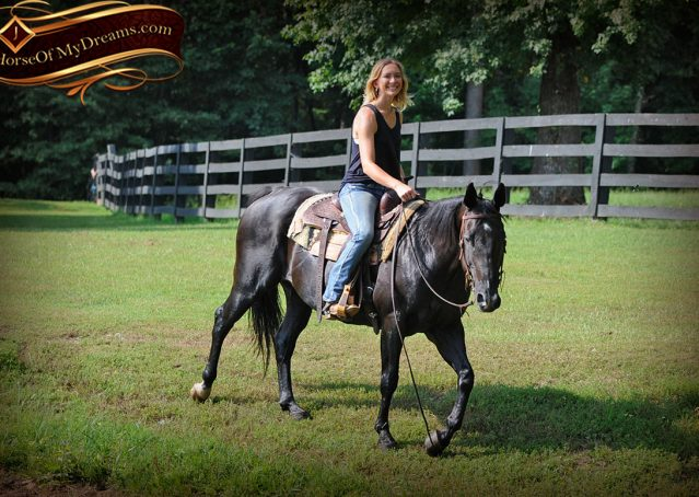 026-Espresso-Black-Quarter-Horse-Gelding-For-Sale