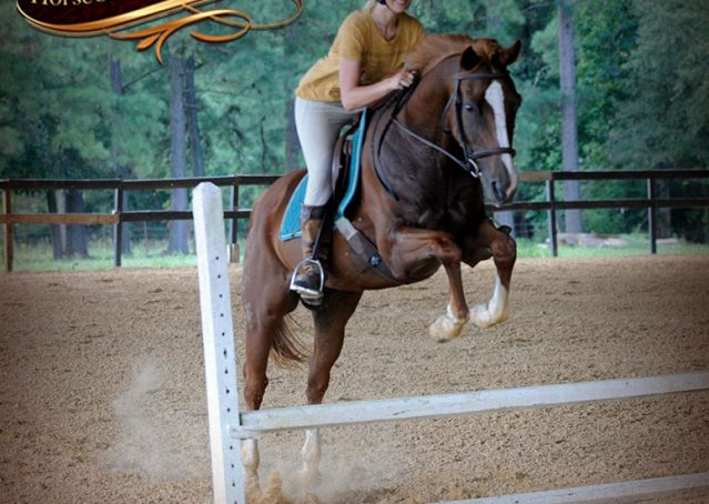 026-Jackson-Chestnut-thoroughbred-gelding-for-sale