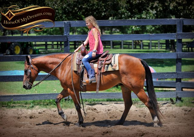 027-Cash-Bay-AQHA-Gelding-For-Sale