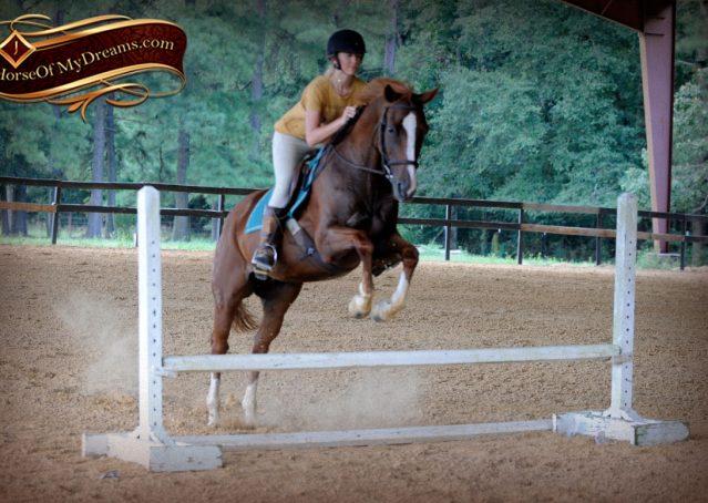 027-Jackson-Chestnut-thoroughbred-gelding-for-sale