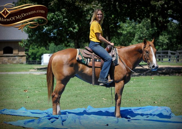 027-Ray-AQHA-Sorrel-Doc-O'lena-gelding-for-sale