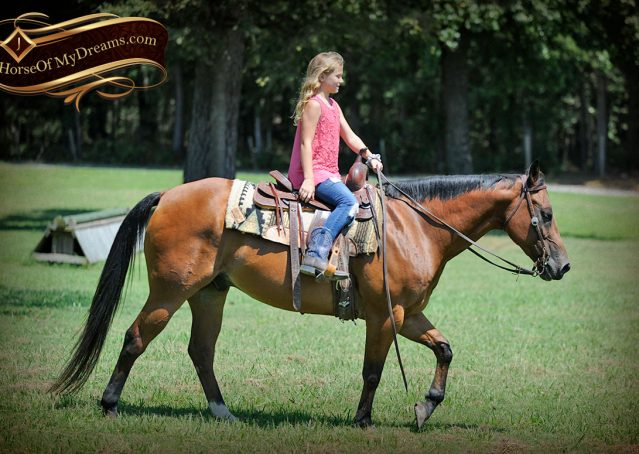 028-Cash-Bay-AQHA-Gelding-For-Sale