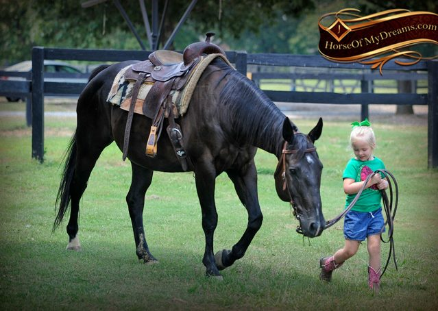 029-Espresso-Black-Quarter-Horse-Gelding-For-Sale