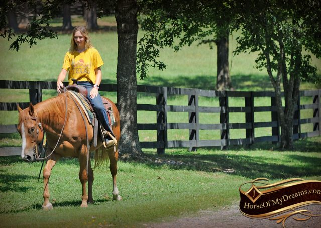 029-Ray-AQHA-Sorrel-Doc-O'lena-gelding-for-sale