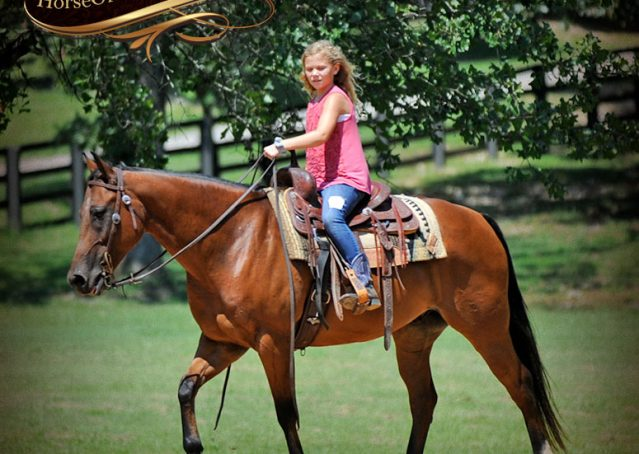 030-Cash-Bay-AQHA-Gelding-For-Sale