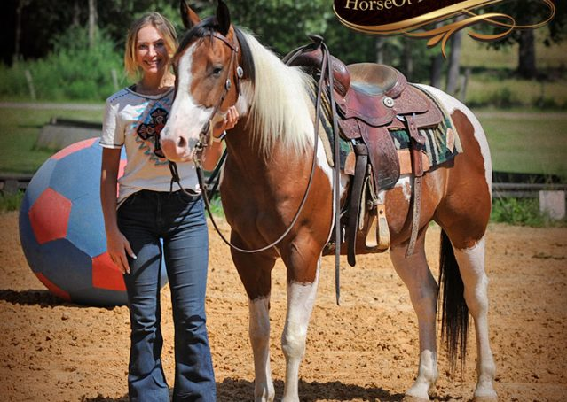 031-Cutter-Bay-White-APHA-Gelding-For-Sale