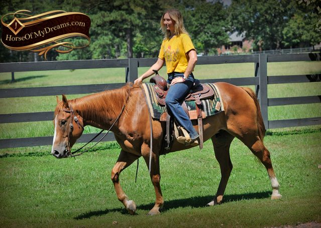 031-Ray-AQHA-Sorrel-Doc-O'lena-gelding-for-sale
