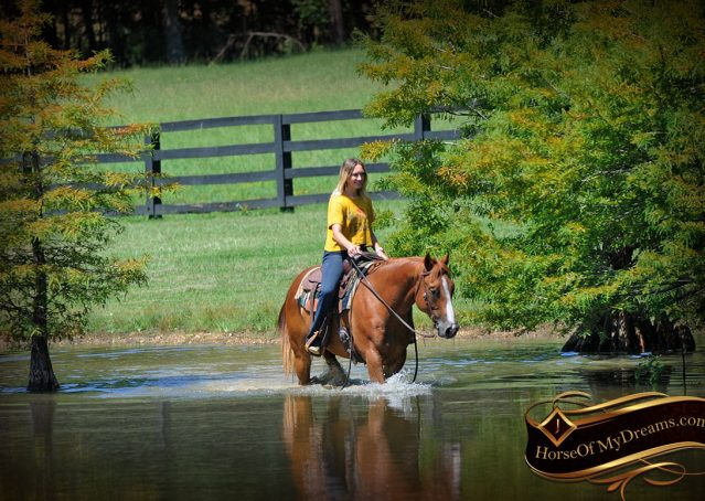 032-Ray-AQHA-Sorrel-Doc-O'lena-gelding-for-sale
