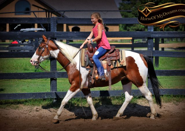 036-Cutter-Bay-White-APHA-Gelding-For-Sale