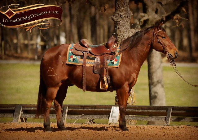 001-Wagner-Bay-AQHA-Gelding-For-Sale