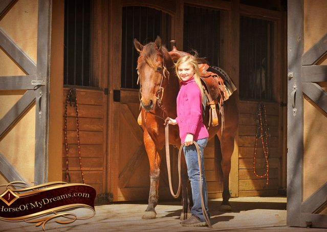 006-Wagner-Bay-AQHA-Gelding-For-Sale