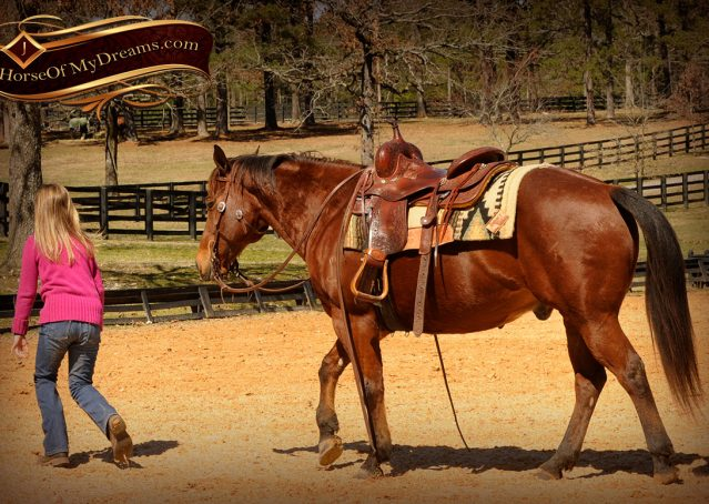 011-Wagner-Bay-AQHA-Gelding-For-Sale