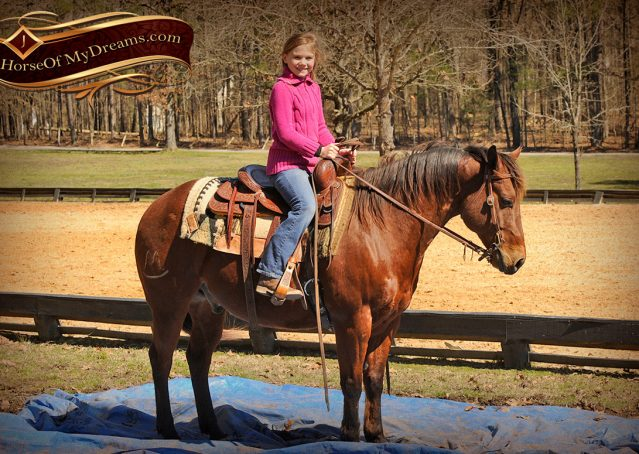 017-Wagner-Bay-AQHA-Gelding-For-Sale