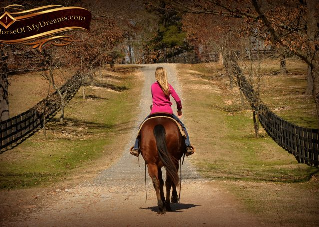 018-Wagner-Bay-AQHA-Gelding-For-Sale