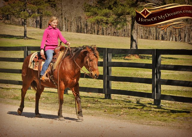 019-Wagner-Bay-AQHA-Gelding-For-Sale