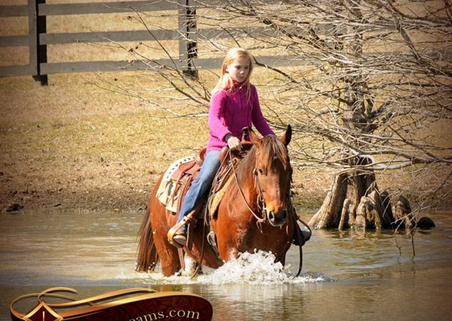 021-Wagner-Bay-AQHA-Gelding-For-Sale