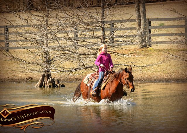 022-Wagner-Bay-AQHA-Gelding-For-Sale