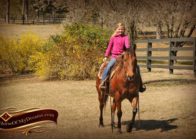 023-Wagner-Bay-AQHA-Gelding-For-Sale