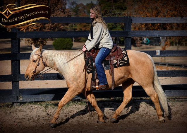 002-Clark-AQHA-Golden-Palomino-For-Sale-Flaxen-Mane