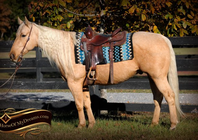 002-Frenchy-Palomino-AQHA-Gelding-For-Sale
