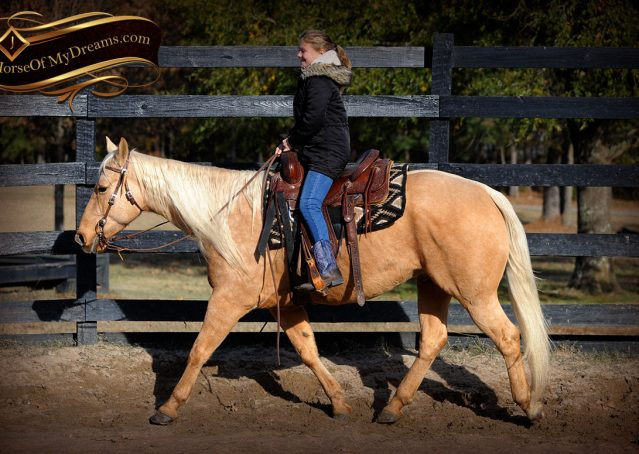003-Clark-AQHA-Golden-Palomino-For-Sale-Flaxen-Mane