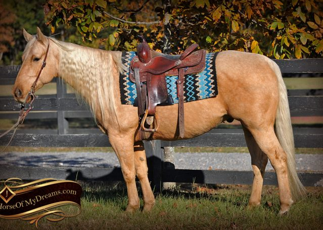 003-Frenchy-Palomino-AQHA-Gelding-For-Sale