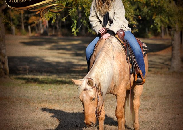 006-Clark-AQHA-Golden-Palomino-For-Sale-Flaxen-Mane