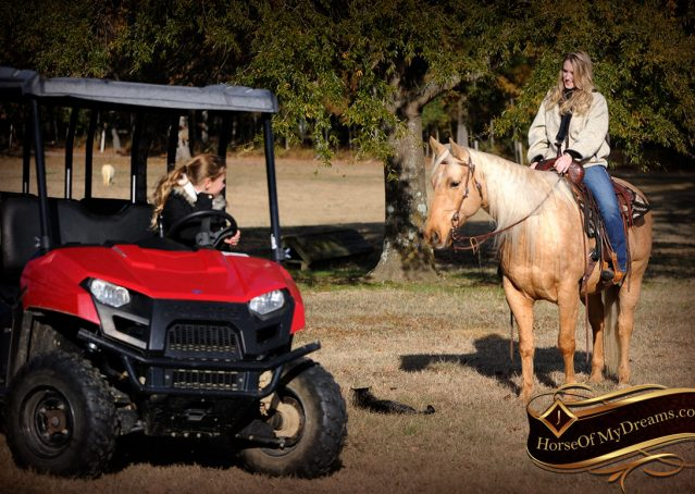 007-Clark-AQHA-Golden-Palomino-For-Sale-Flaxen-Mane