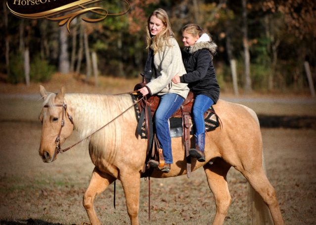 009-Clark-AQHA-Golden-Palomino-For-Sale-Flaxen-Mane