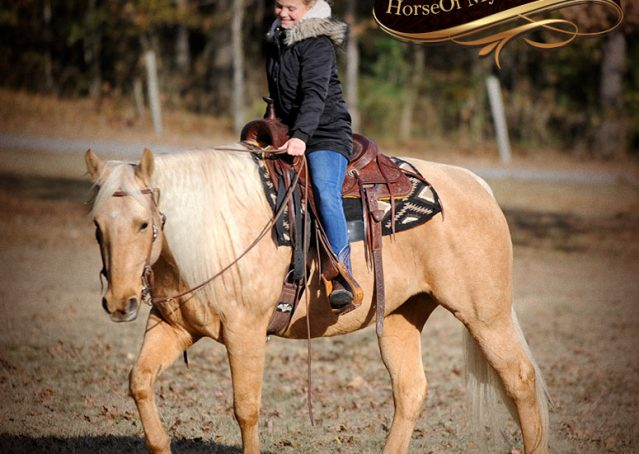 011-Clark-AQHA-Golden-Palomino-For-Sale-Flaxen-Mane