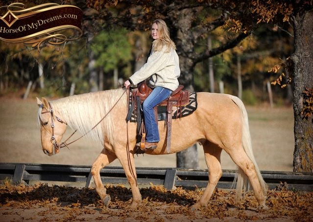 012-Clark-AQHA-Golden-Palomino-For-Sale-Flaxen-Mane