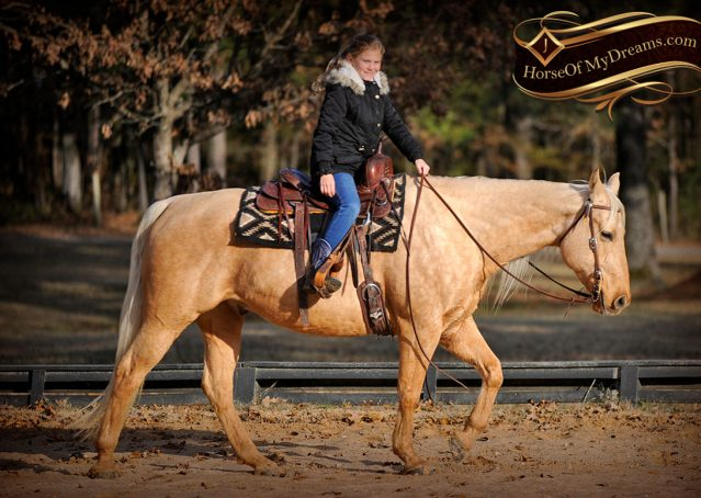 013-Clark-AQHA-Golden-Palomino-For-Sale-Flaxen-Mane