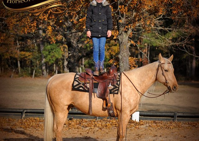 014-Clark-AQHA-Golden-Palomino-For-Sale-Flaxen-Mane