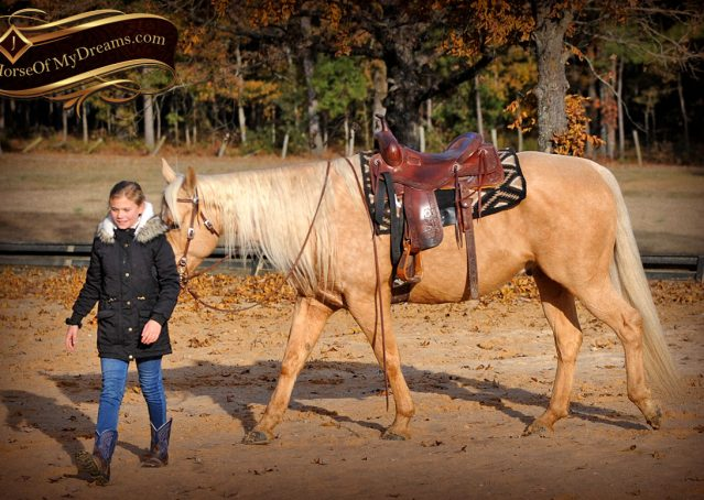 016-Clark-AQHA-Golden-Palomino-For-Sale-Flaxen-Mane