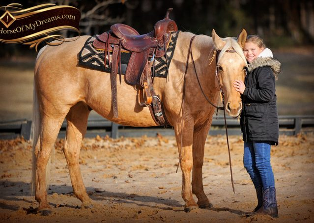 017-Clark-AQHA-Golden-Palomino-For-Sale-Flaxen-Mane