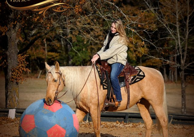 019-Clark-AQHA-Golden-Palomino-For-Sale-Flaxen-Mane