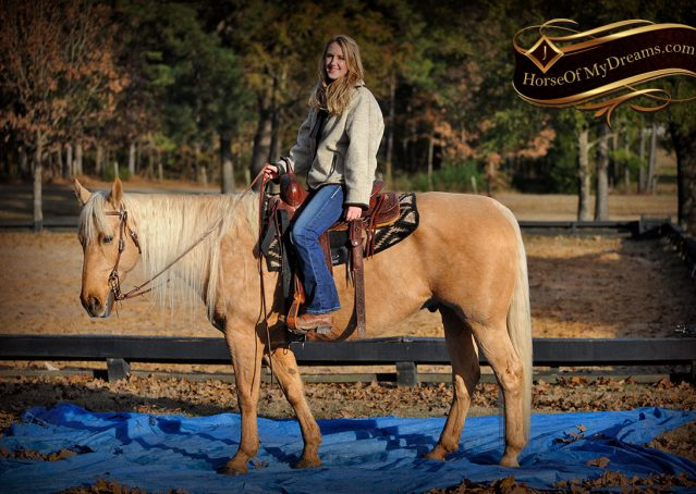 020-Clark-AQHA-Golden-Palomino-For-Sale-Flaxen-Mane