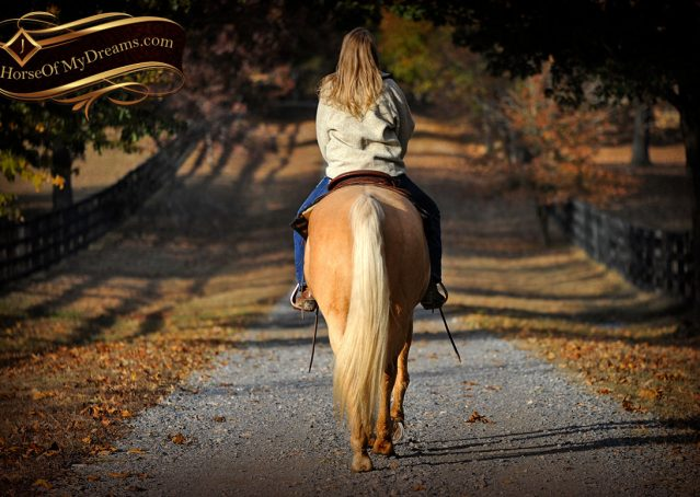 021-Clark-AQHA-Golden-Palomino-For-Sale-Flaxen-Mane